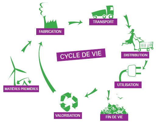 cycle-vie
